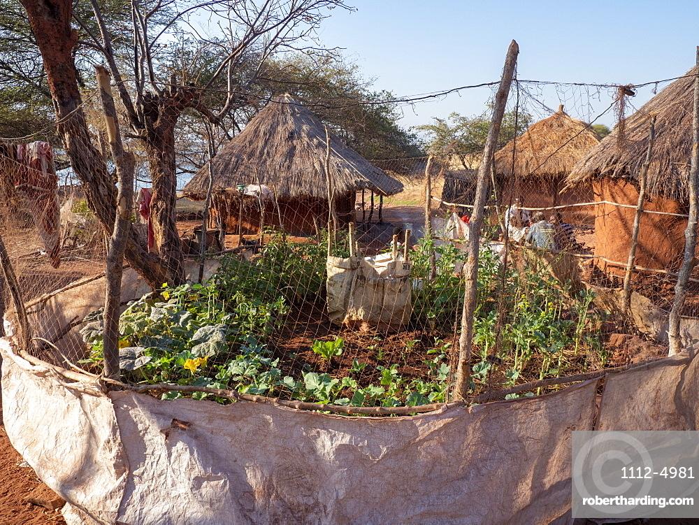 A vegetable garden in the fishing village of Musamba, on the shoreline of Lake Kariba, Zimbabwe, Africa