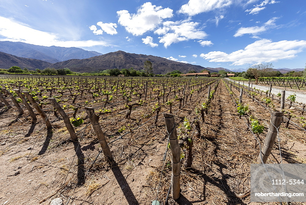 Estancia Colome, vineyards located in the high Calchaqui valley at 2300 meters above sea level, Salta Province, Argentina, South America
