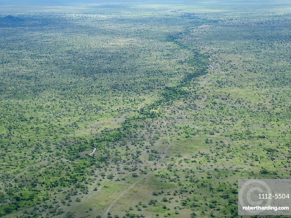 Aerial view of water course on the Serengeti Plains, Serengeti National Park, UNESCO World Heritage Site, Tanzania, East Africa, Africa