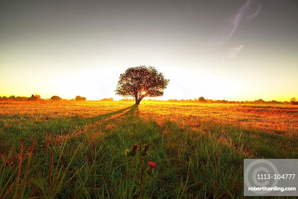 Tree on a meadow in the morning sun casting long shadows, Aubing, Munich, Upper Bavaria, Bavaria, Germany