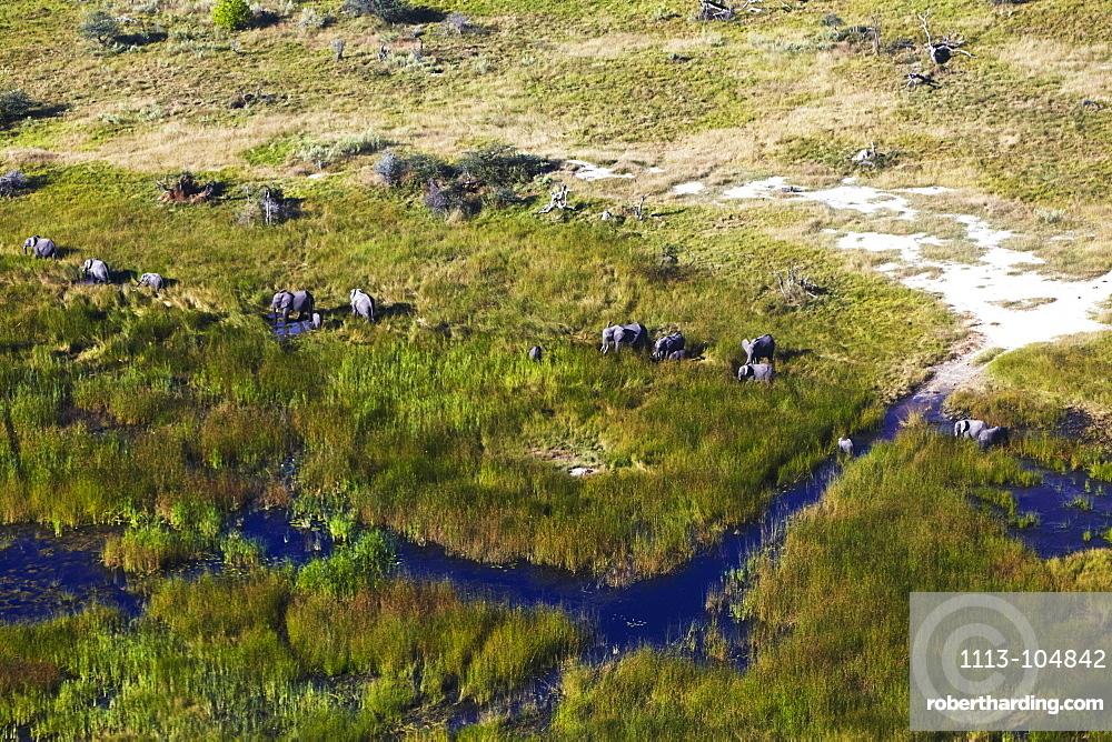 Elephants in Okavango Delta, Maun, Botswana