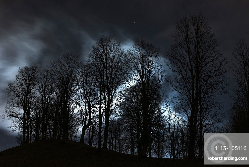 Forest silhouette at night in front of illuminated fog banks, Oberstdorf, Allgaeu, Germany