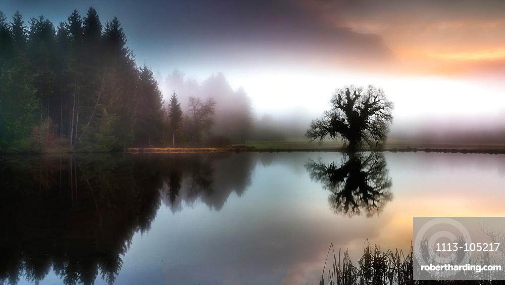 Foggy autumn mood at the Fischweiher near Bernried, Bavaria, Germany