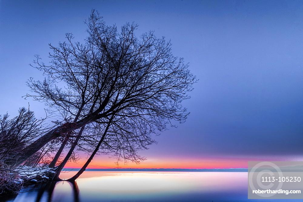 Tree in the park at sunrise on Lake Starnberg, Tutzing, Bavaria, Germany