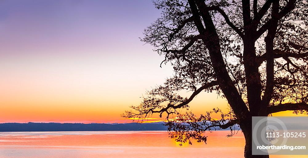 Bare tree in silhouette at sunrise on Lake Starnberg, Bernried, Bavaria, Germany