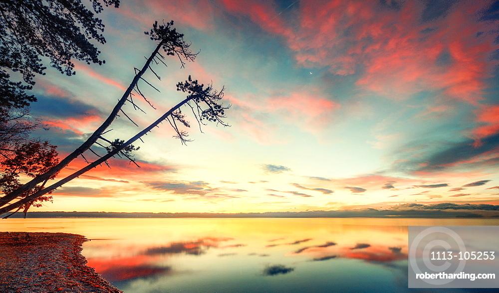 Sunrise with tree silhouettes on Lake Starnberg, Brahmspromenade, Tutzing, Bavaria, Germany