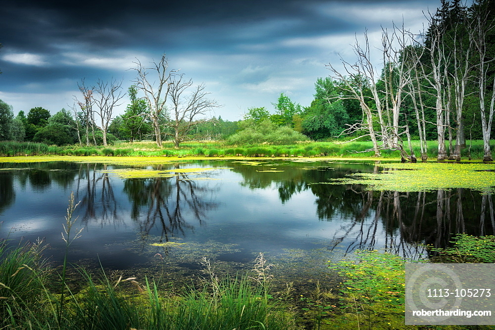 Thunderstorm mood at a fish pond, Andechs, Bavaria, Germany