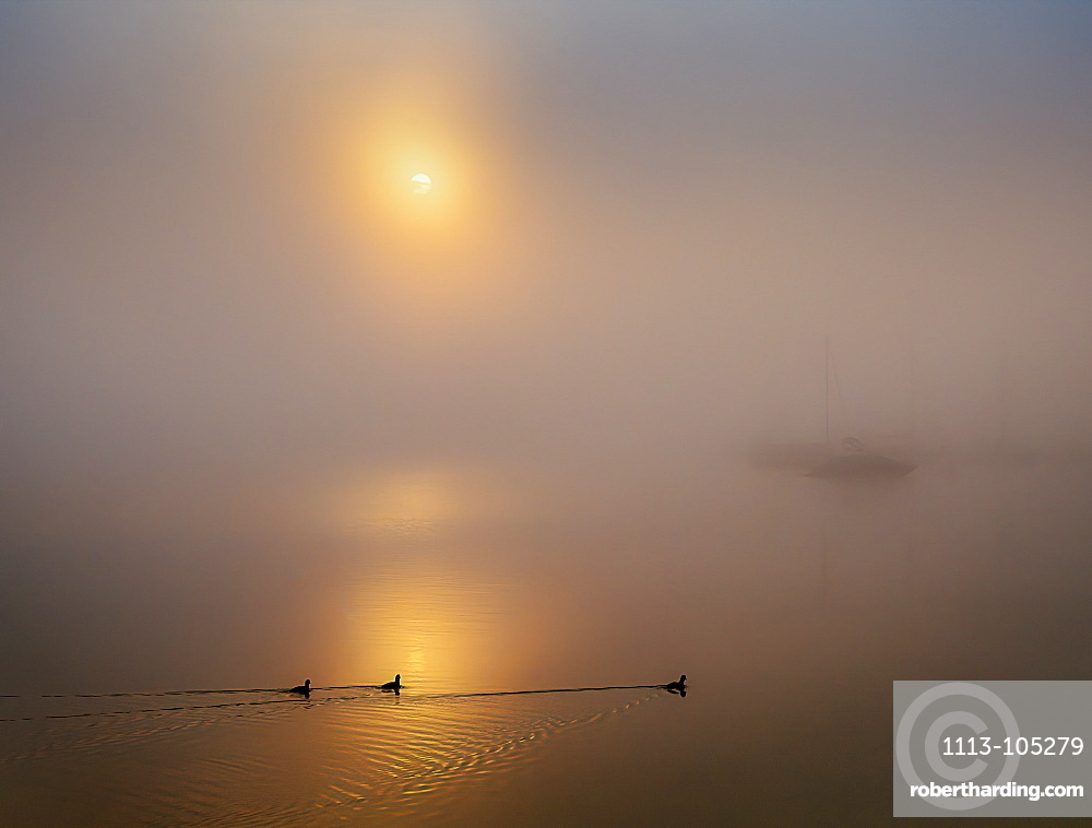 Boats and coots in the harbor in foggy autumn mood, sunrise at Lake Starnberg, Seeshaupt, Bavaria, Germany