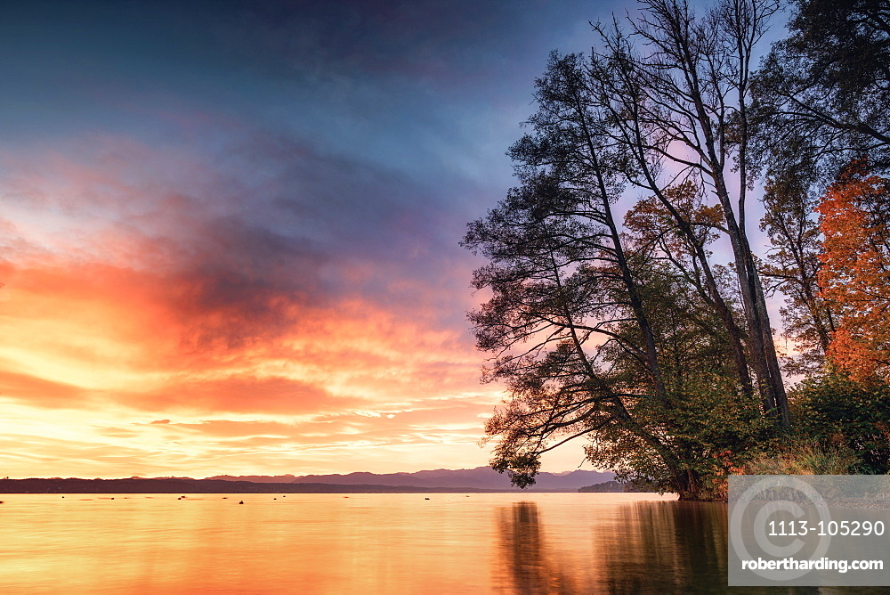 Tree silhouette in winter at sunrise on Lake Starnberg, Tutzing, Bavaria, Germany