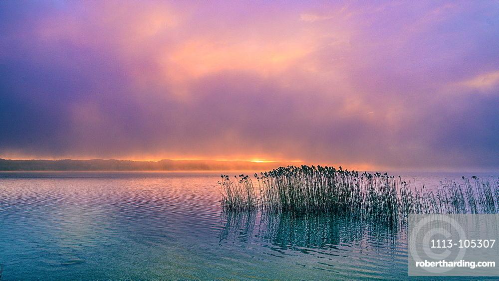 Reeds in the fog at sunrise on Lake Starnberg, Bavaria, Germany