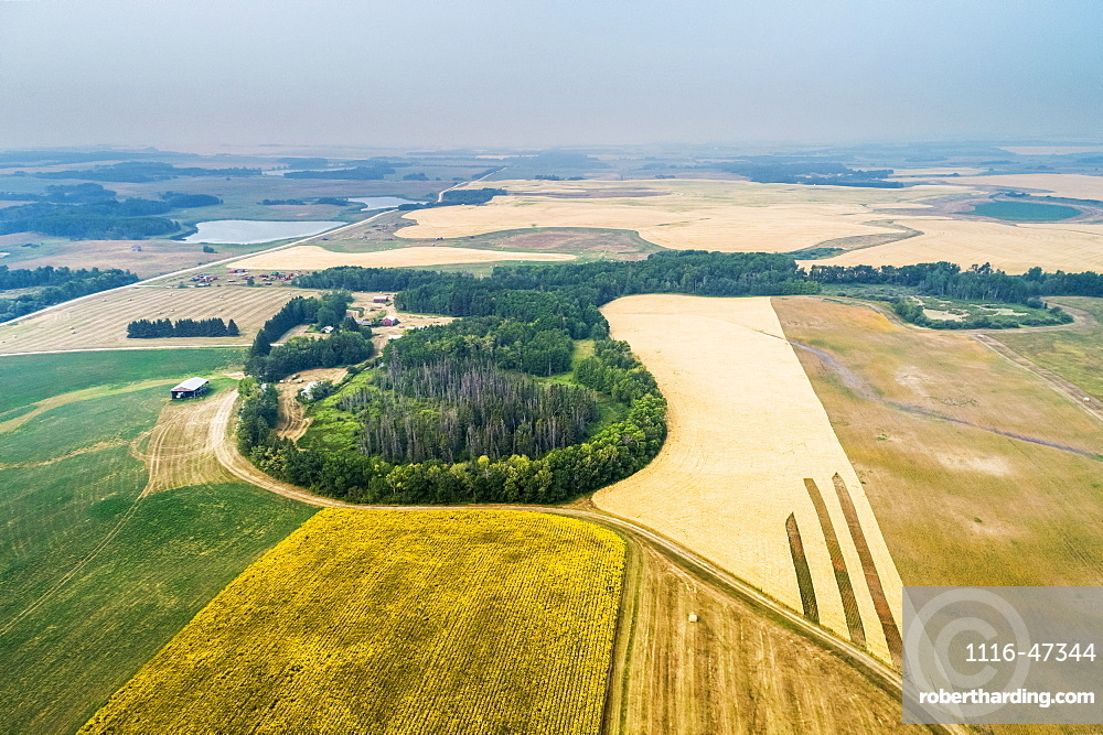 Aerial view of a patch work of different crops in a field, including sunflowers in bloom, and golden grains, with pockets of treed areas, Erickson, Manitoba, Canada