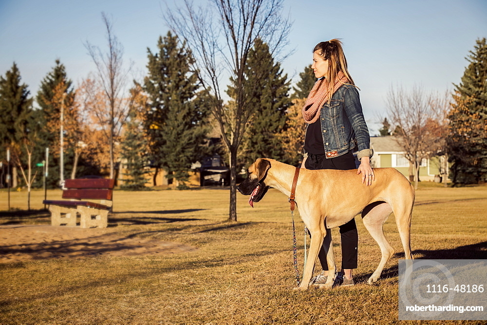 A beautiful woman stopping while walking her Great Dane through the woods in a city park on a warm fall evening, Edmonton, Alberta, Canada