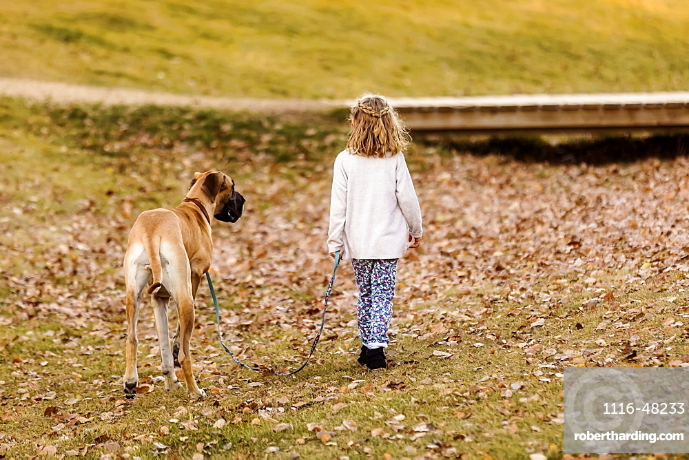 A little girl walking her Great Dane dog in a city dog park on a warm fall night, Edmonton, Alberta, Canada