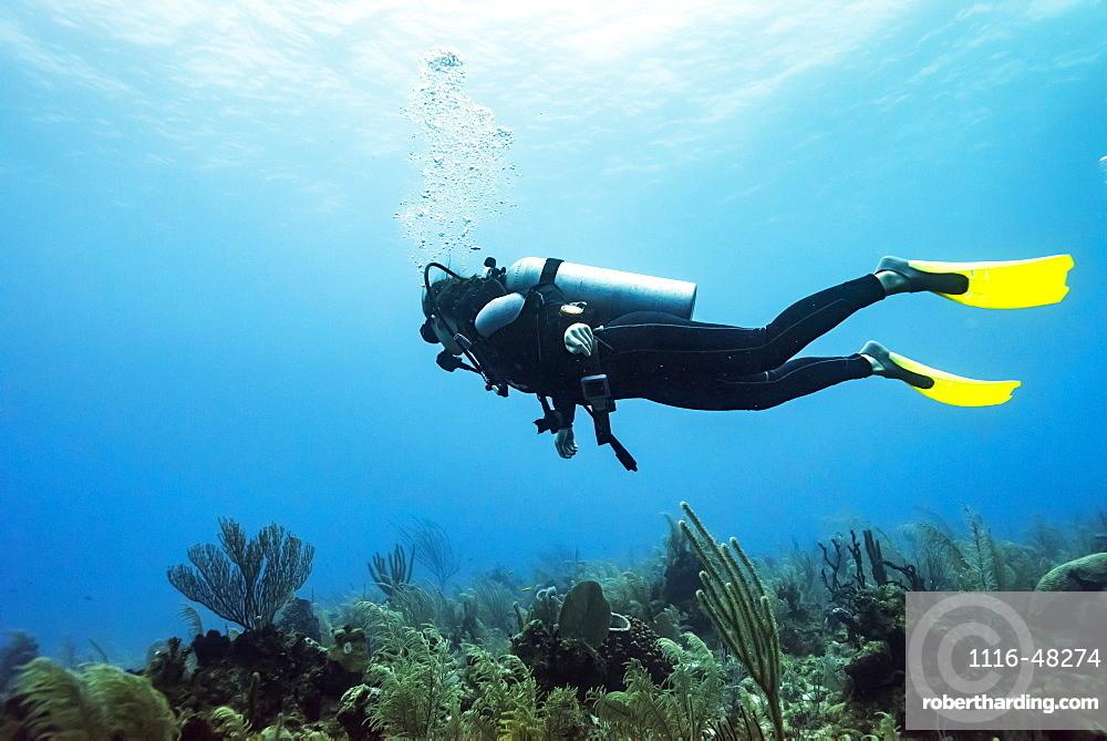 Scuba diver at Joe's Wall Dive Site, Belize Barrier Reef, Belize