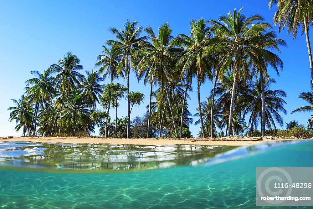Split view with beach and palm trees, Lanai, Hawaii, United States of America