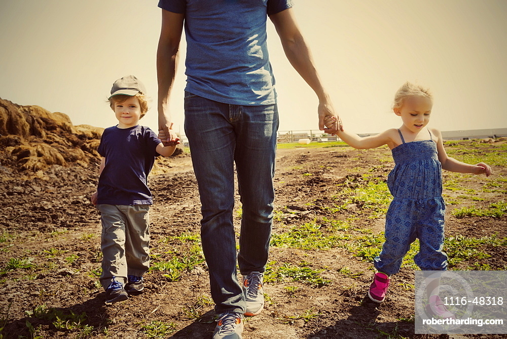 A father walks and holds hands with his young son and daughter on a farm, Edmonton, Alberta, Canada