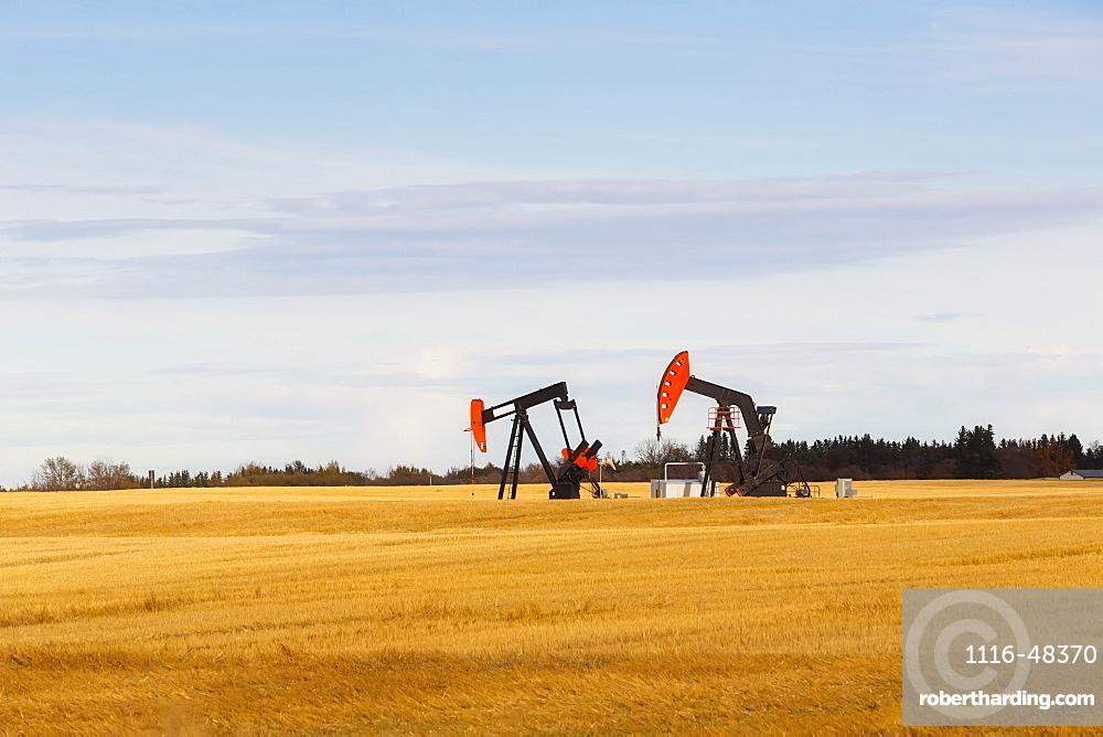 Working pumpjacks in the middle of a golden wheat field, post harvest, Edmonton, Alberta, Canada