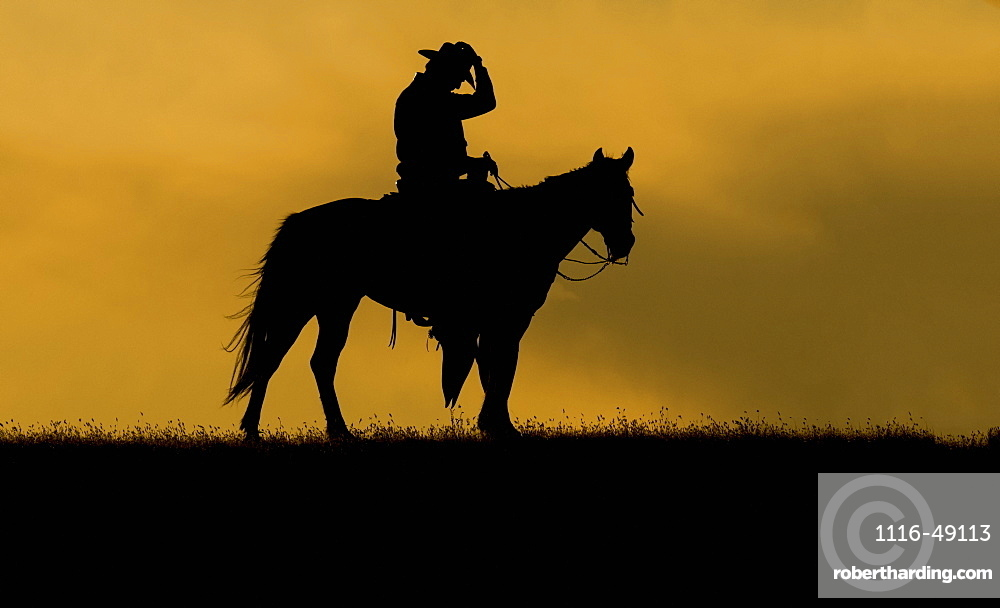 Silhouette of a cowboy on a horse against a sky of golden cloud at sunset, Montana, United States of America