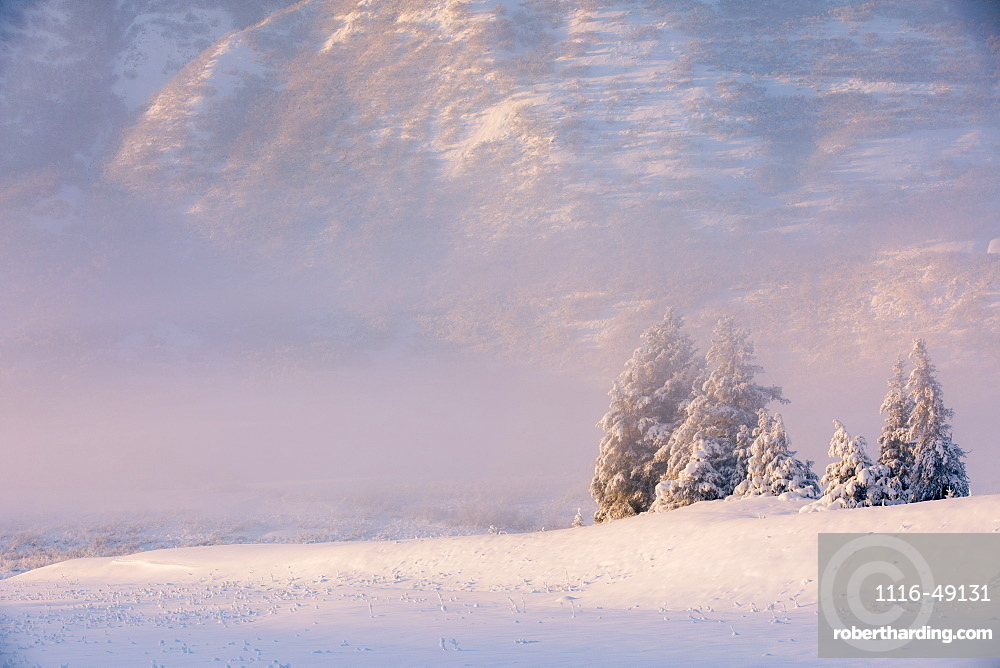 Winter view of a small stand of snow-covered spruce trees in fog, Turnagain Pass, Kenai Peninsula, Southcentral Alaska, USA