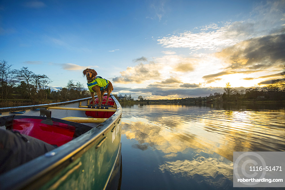 Dog on front of canoe paddling on a river at sunset; Castleconnel, County Limerick, Ireland