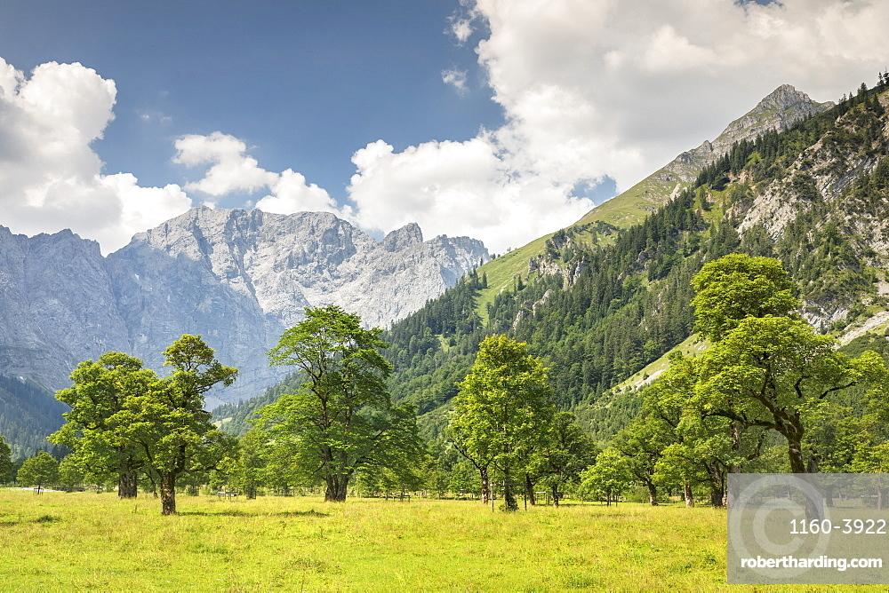 Grosser Ahornboden, maple trees, Karwendel mountains, nature reserve, Eng, Hinterriss, Tyrol, Austria, Europe