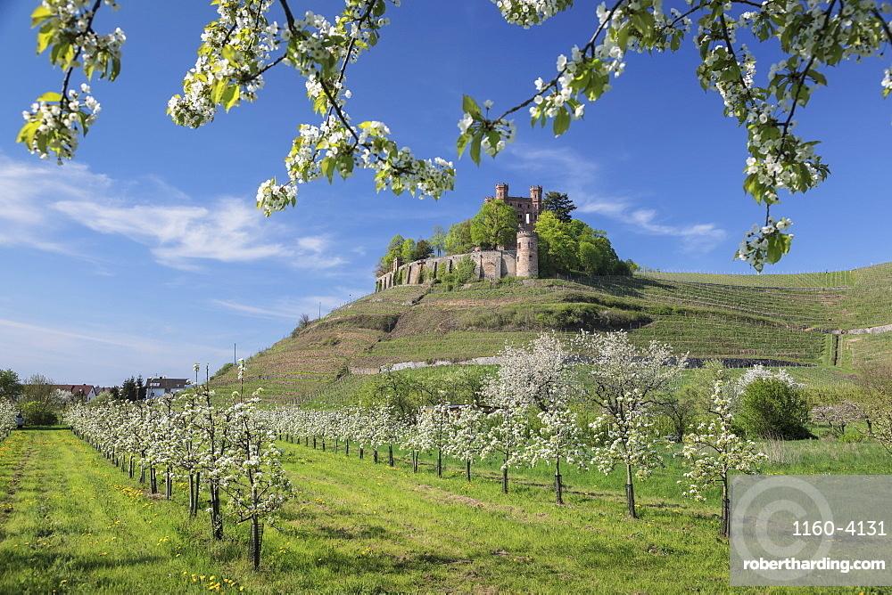 Ortenberg Castle in spring, Offenburg, Black Forest, Baden-Wurttemberg, Germany, Europe