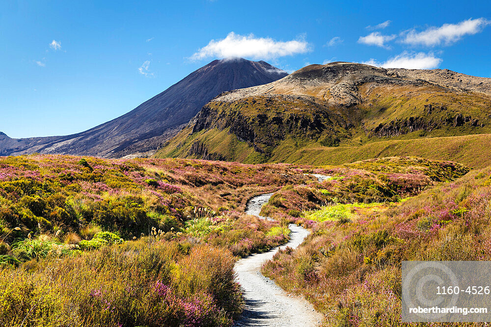 Mount Ngauruhoe, Tongariro Alpine Crossing, Tongariro National Park, UNESCO World Heritage Site, North Island, New Zealand, Pacific
