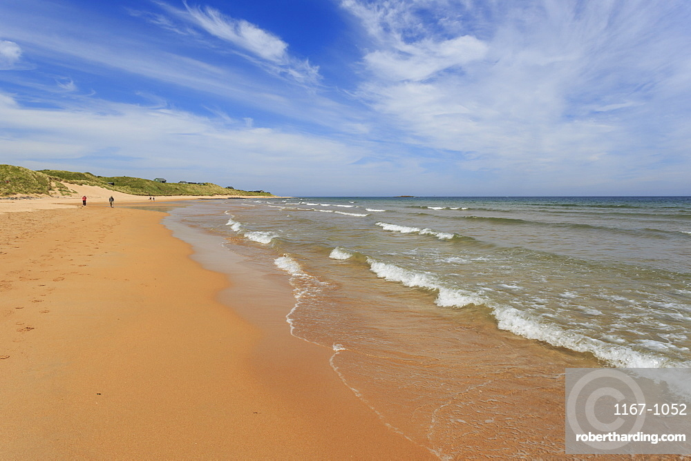 Walkers on the golden sands of Embleton Bay, Northumberland Coast. England, Europe