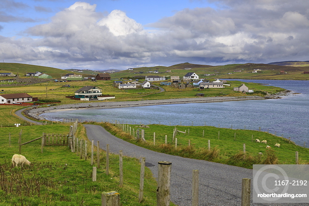Papil, winding coastal road and village, sheep, West Burra Island, Shetland Isles, Scotland, United Kingdom, Europe