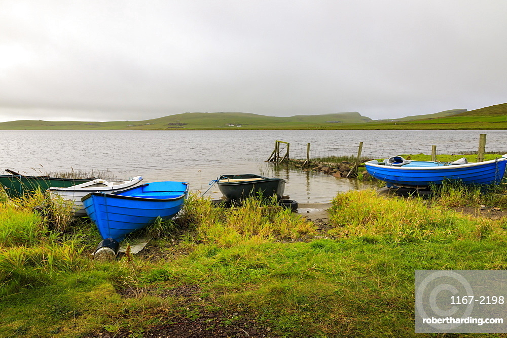 Spiggie Loch, colourful rowing boats on the shore, Scousburgh, South Mainland, Shetland Isles, Scotland, United Kingdom, Europe