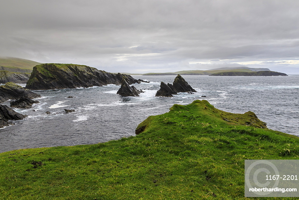 Coastal scenery, jagged cliffs and stacks, misty hills, St Ninian's Isle, Bigton, South Mainland, Shetland Isles, Scotland