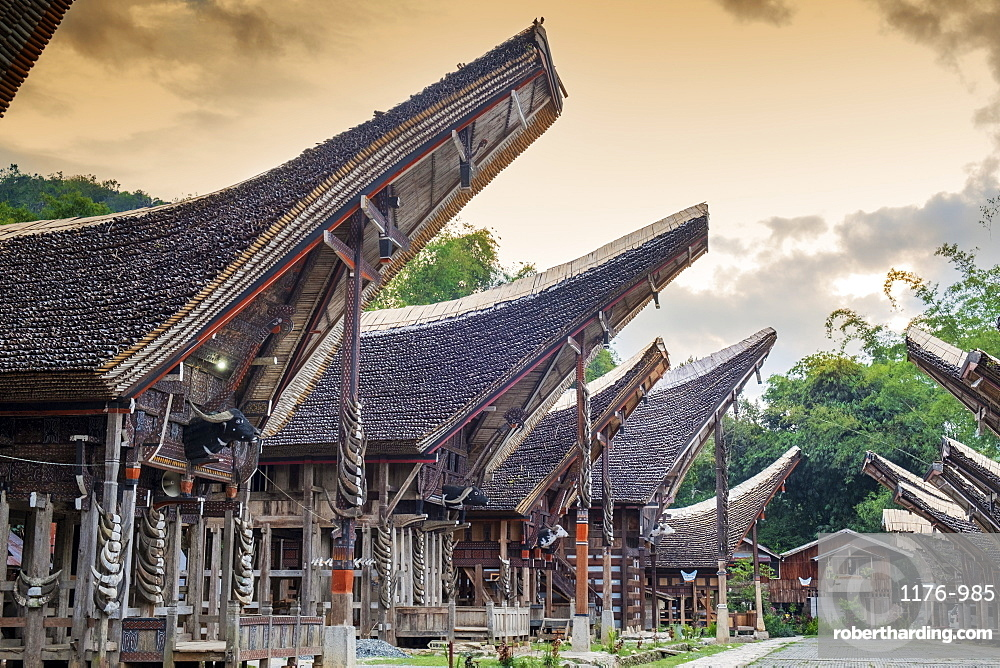A rice farming village with traditional Torajan Tongkonan long houses, Tana Toraja, Sulawesi, Indonesia, Southeast Asia, Asia