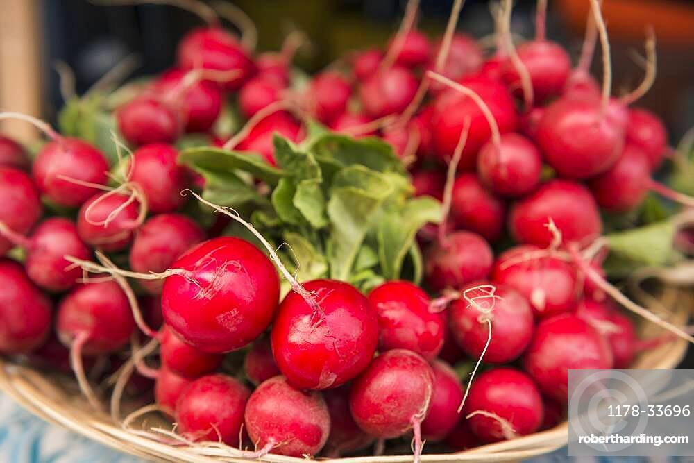 Close up of bunches of radishes