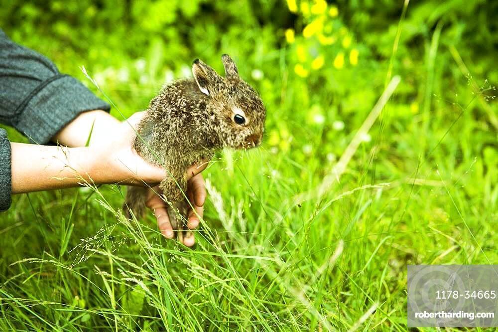 Caucasian farmer holding rabbit in garden