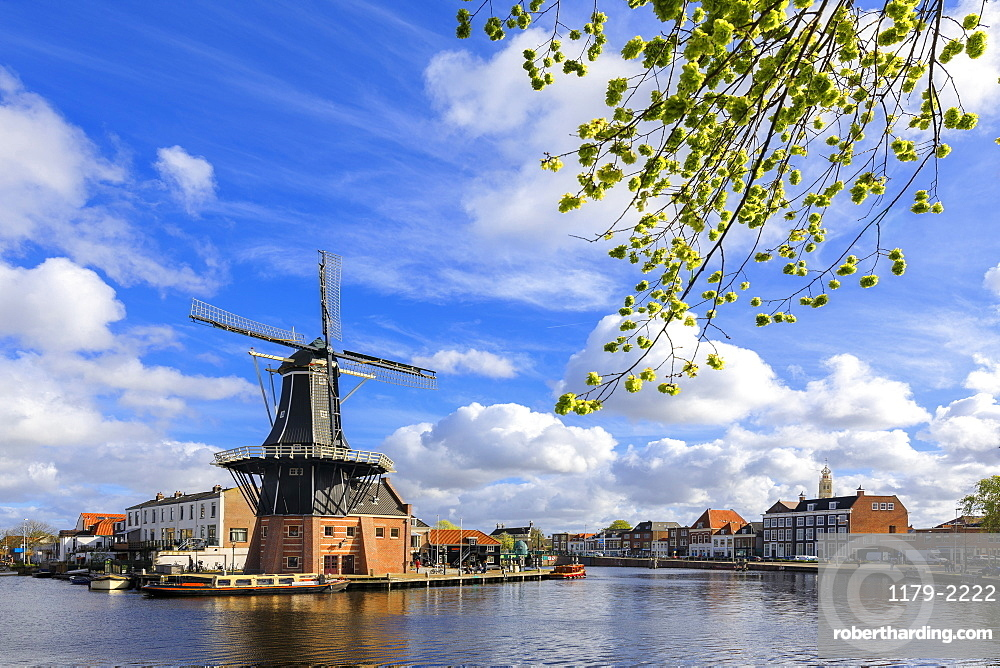 Tree branches frame the Windmill De Adriaan reflected in a canal of the River Spaarne, Haarlem, North Holland, The Netherlands, Europe