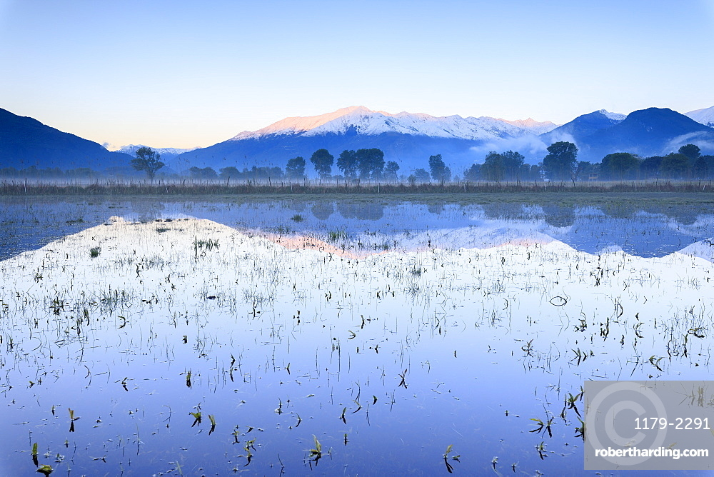 Pink sky at dawn on the snowy peaks of Monti Lariani reflected in flooded land, Pian di Spagna, Valtellina, Lombardy, Italy, Europe