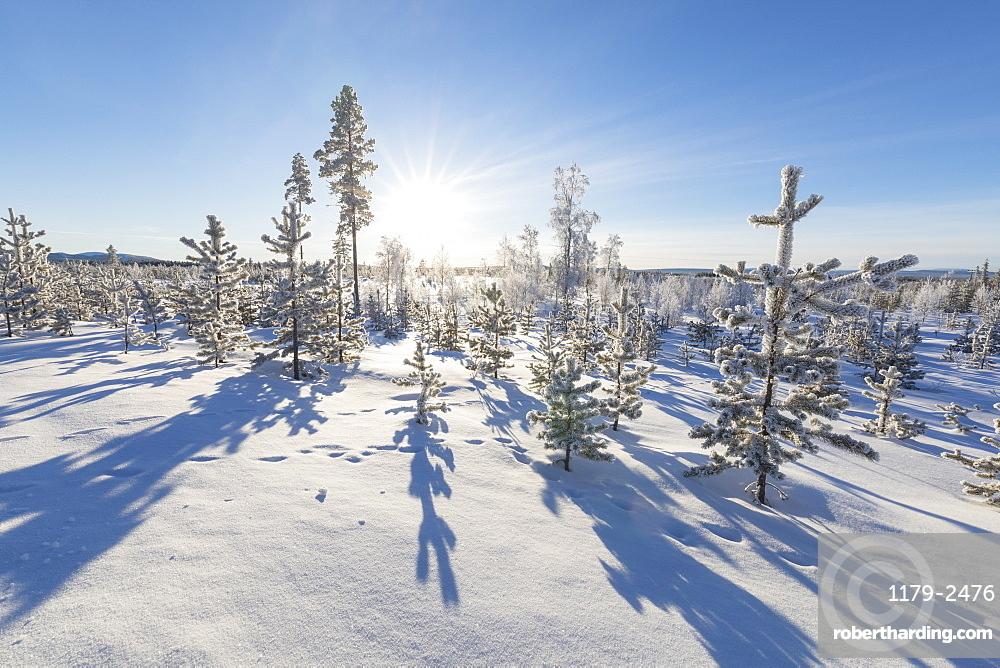 Sunburst on frozen trees covered with snow, Kiruna, Norrbotten County, Lapland, Sweden, Scandinavia, Europe