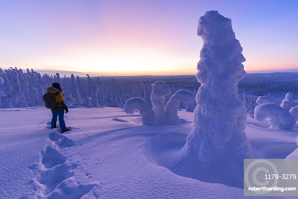 Hiker in the frozen forest, Riisitunturi National Park, Posio, Lapland, Finland, Europe