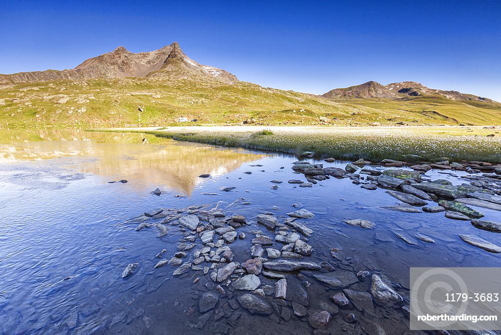 Lago Bianco surrounded by fields of wildflowers, Gavia Pass, Valfurva, Valtellina, province of Sondrio, Lombardy, Italy, Europe