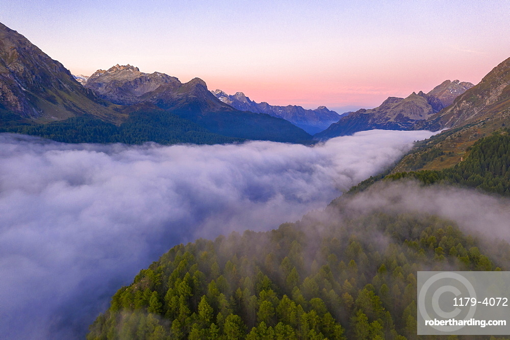 Foggy sunrise over woods of Maloja Pass at dawn, aerial view, canton of Graubunden, Engadin, Switzerland (drone)