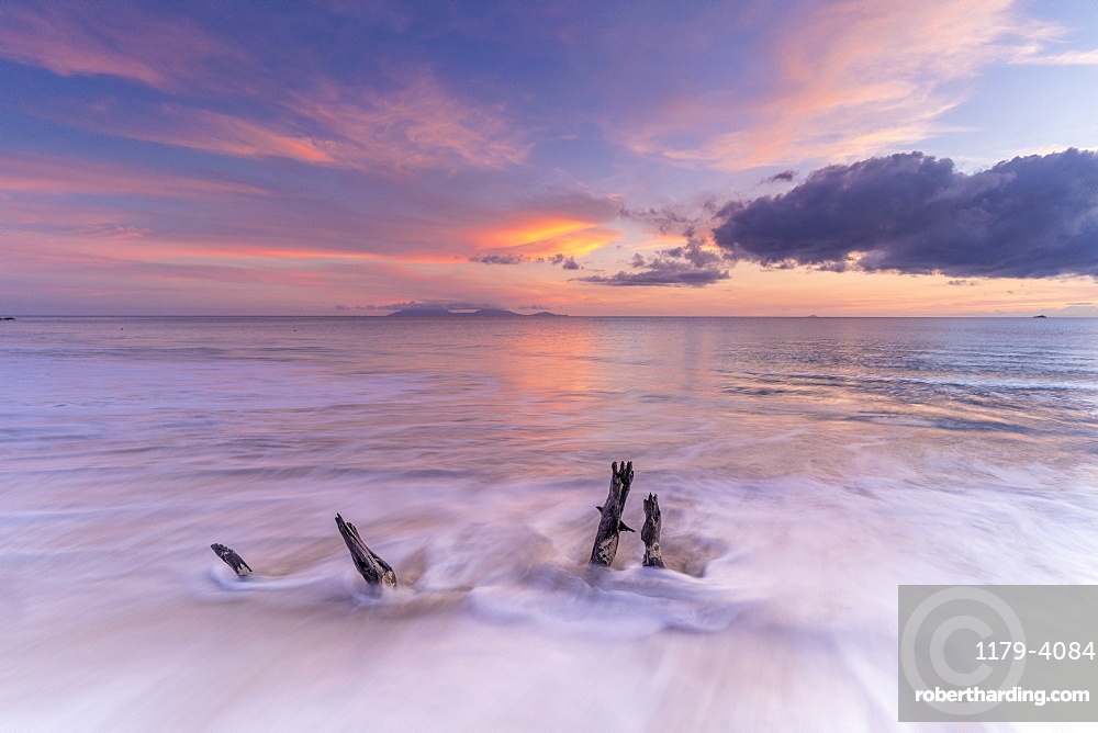 Waves crashing on tree trunks on sand beach at sunset, Caribbean, Antilles, Central America