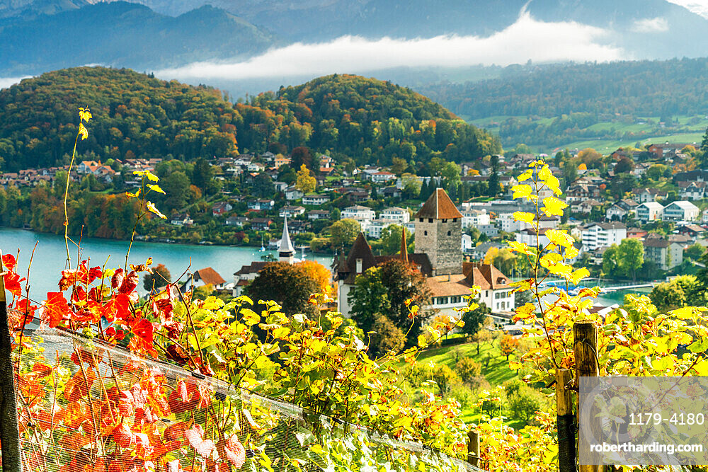 Spiez Castle on shores of lake Thun framed by vine leaves in autumn, canton of Bern, Switzerland, Europe