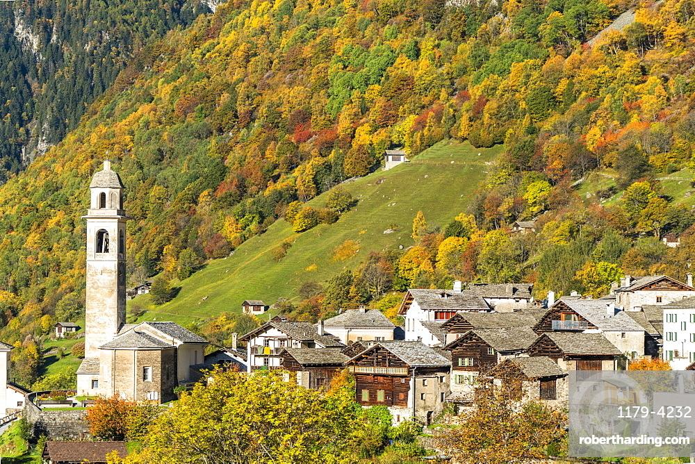 Larch trees and woods framing the village of Soglio in autumn, Val Bregaglia, canton of Graubunden, Switzerland