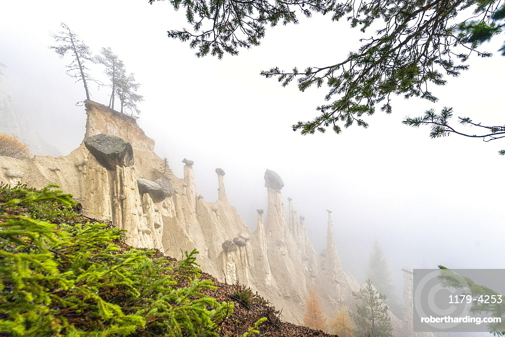Pine tree branches in the nature park of the Earth Pyramids, Perca/Percha, province of Bolzano, South Tyrol, Italy