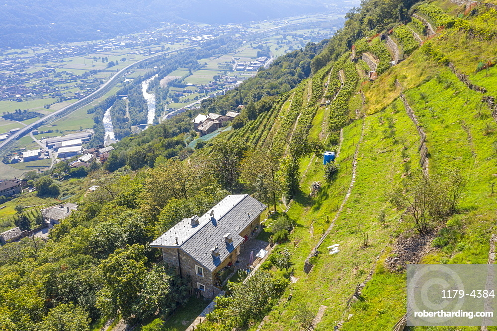 Farms on hills of terraced vineyards, Costiera dei Cech, Valtellina, Sondrio province, Lombardy, Italy