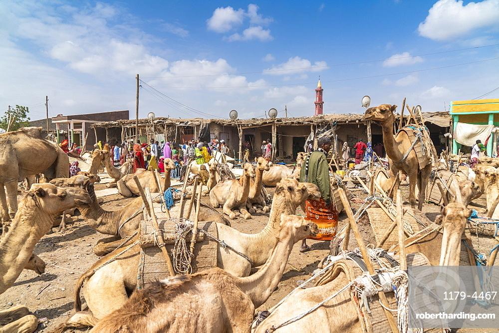 Camels at the cattle market, Asaita, Afar Region, Ethiopia, Africa