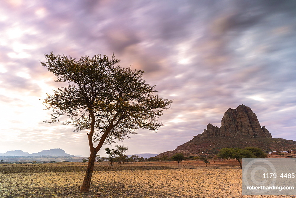 Lone trees at sunset, Gheralta Mountains, Hawzen, Tigray Region, Ethiopia, Africa
