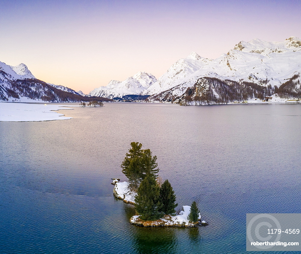 Lone trees in the middle of Lake Sils framed by snow capped mountains at dawn, Engadin, canton of Graubunden, Switzerland