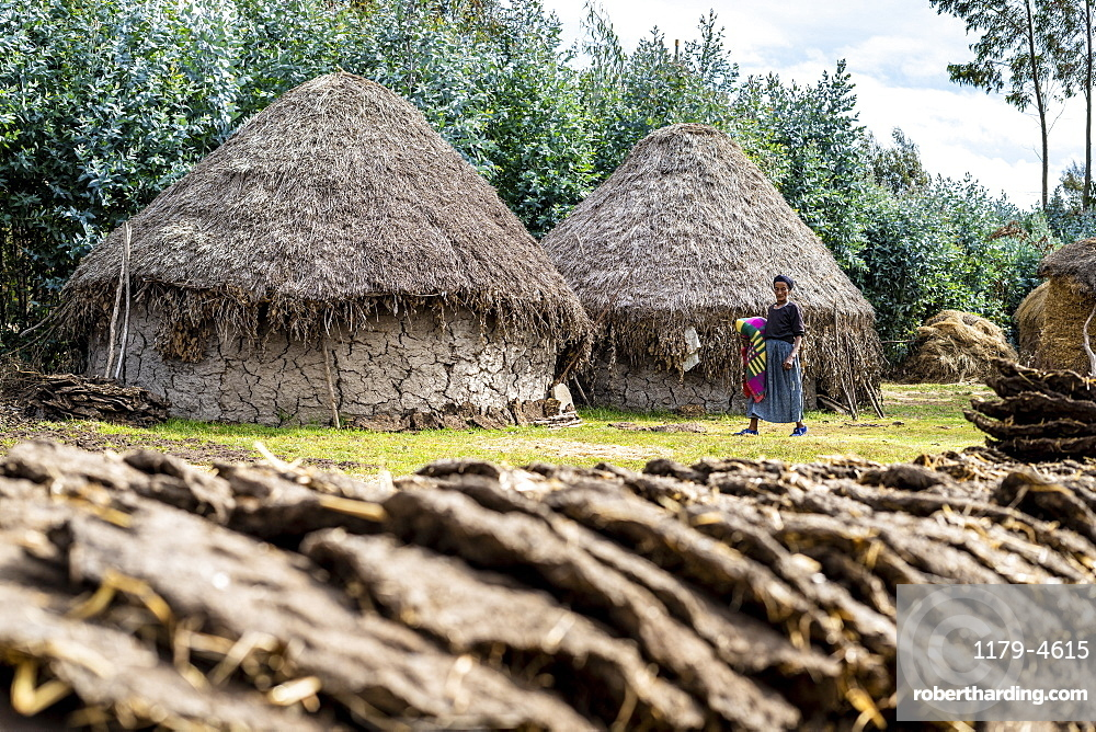 Drying dung used for fuel for the rural village, Wollo Province, Amhara Region, Ethiopia, Africa