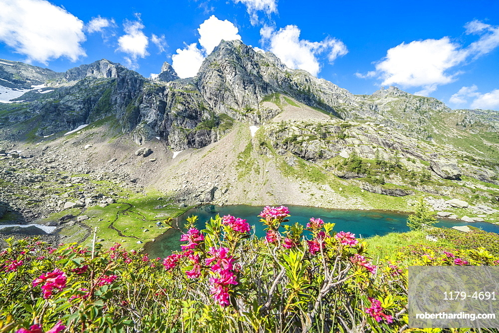 Summer sky over mountain peaks and rhododendrons framing lake Zancone, Orobie Alps, Valgerola, Valtellina, Lombardy, Italy, Europe